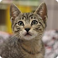 Adopt A Pet :: Leila - Sacramento, CA
