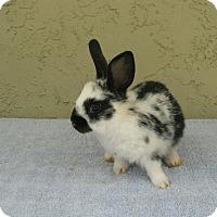 Adopt A Pet :: Kiko - Bonita, CA