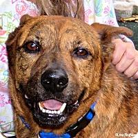 Adopt A Pet :: Tony - Miami, FL