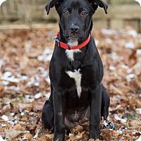 Adopt A Pet :: Zara - Drumbo, ON