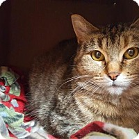 Adopt A Pet :: Shawna - Madison, WI