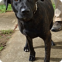 Adopt A Pet :: Stormy - Boston, MA