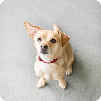 Adopt A Pet :: Virgil - Los Angeles, CA