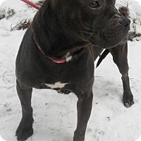 Adopt A Pet :: Truffle - Siren, WI