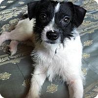 Adopt A Pet :: Flossie - Lodi, CA