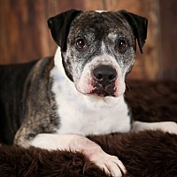 Adopt A Pet :: Striker - Minneapolis, MN