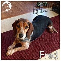 Adopt A Pet :: Fred - Pittsburgh, PA