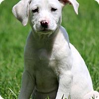 Adopt A Pet :: Mallory - Waldorf, MD