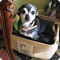 Adopt A Pet :: *BOOBOO - Sacramento, CA