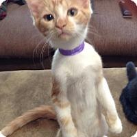Adopt A Pet :: Tres - Phoenix, AZ