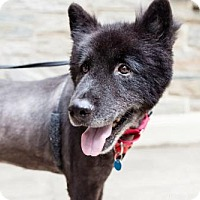 Adopt A Pet :: Bennegen (Has application) - Washington, DC