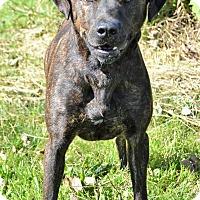 Adopt A Pet :: Marko - Michigan City, IN