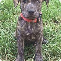 Adopt A Pet :: Murphy - Dayton, OH