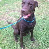 Adopt A Pet :: Porter - Temecula, CA