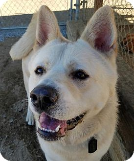 Akita Dog for adoption in Romoland, California - Fuji