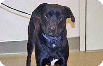 Labrador Retriever Mix Dog for adoption in Wildomar, California - Tucker/Tuco