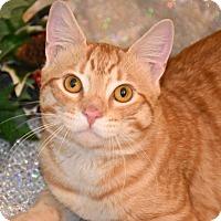 Adopt A Pet :: Cheez-It - Bristol, CT
