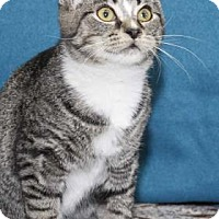 Adopt A Pet :: Drumstick - South Bend, IN