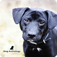Adopt A Pet :: PEPE - Peoria, IL