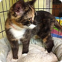 Adopt A Pet :: Lizzy - Byron Center, MI