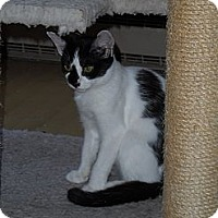 Adopt A Pet :: Stella - Tarboro, NC