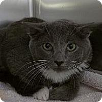 Adopt A Pet :: Josh Hutcherson - Richboro, PA