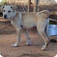 Adopt A Pet :: Marlowe - Athens, GA