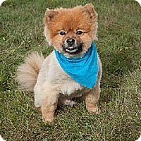 Adopt A Pet :: Zander - Harrisburg, PA