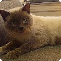 Adopt A Pet :: Ling - Hamburg, NY