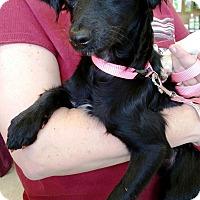 Adopt A Pet :: Star - Vista, CA