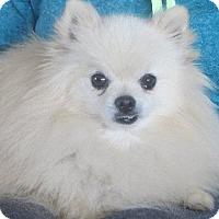 Adopt A Pet :: Gordon - Greenville, RI