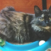 Adopt A Pet :: Miss Squeaky P - Springfield, OR