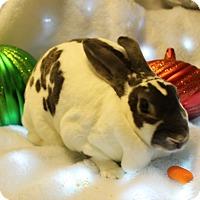 Adopt A Pet :: Sadie - Hillside, NJ
