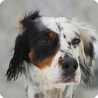 Adopt A Pet :: DANI - Pine Grove, PA