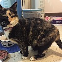 Adopt A Pet :: Winnie - Colorado Springs, CO