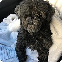 Adopt A Pet :: Blossom - Tucson, AZ