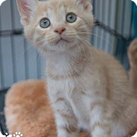 Adopt A Pet :: Connor - Merrifield, VA