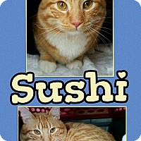 Adopt A Pet :: Sushi - Edwards AFB, CA