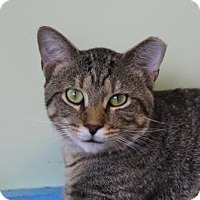 Adopt A Pet :: Ralphie - Indianapolis, IN