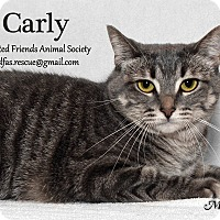 Adopt A Pet :: Carly - Ortonville, MI