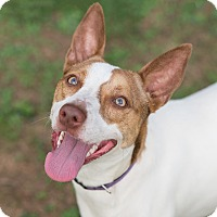 Adopt A Pet :: Luna - Westfield, NY