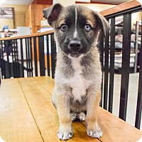 Adopt A Pet :: Keenen - Sacramento, CA