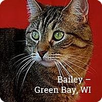 Adopt A Pet :: Bailey - Green Bay, WI