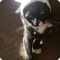 Adopt A Pet :: Caesar - Waldorf, MD