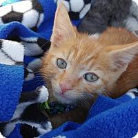 Adopt A Pet :: Dexter - Oakhurst, NJ