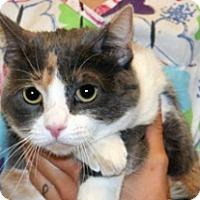 Adopt A Pet :: Katniss - Wildomar, CA