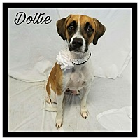 Adopt A Pet :: Dottie - Grand Bay, AL