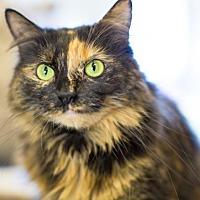 Adopt A Pet :: Woockie - Auburn, CA