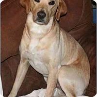 Adopt A Pet :: Chester - Staunton, VA
