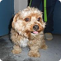Adopt A Pet :: Flynn - Lockhart, TX